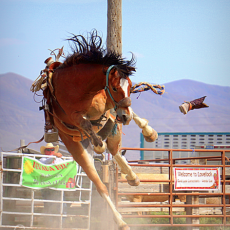 Ceily Rae Photography & Design Western Photography Rodeo Bronc