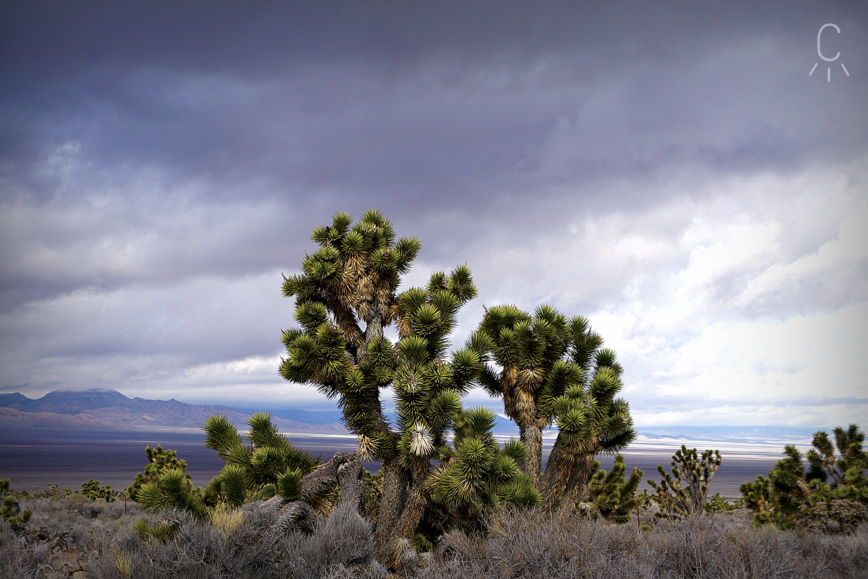 Ceily Rae Photography & Design Western Photography Landscape